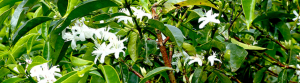 floraison-slide